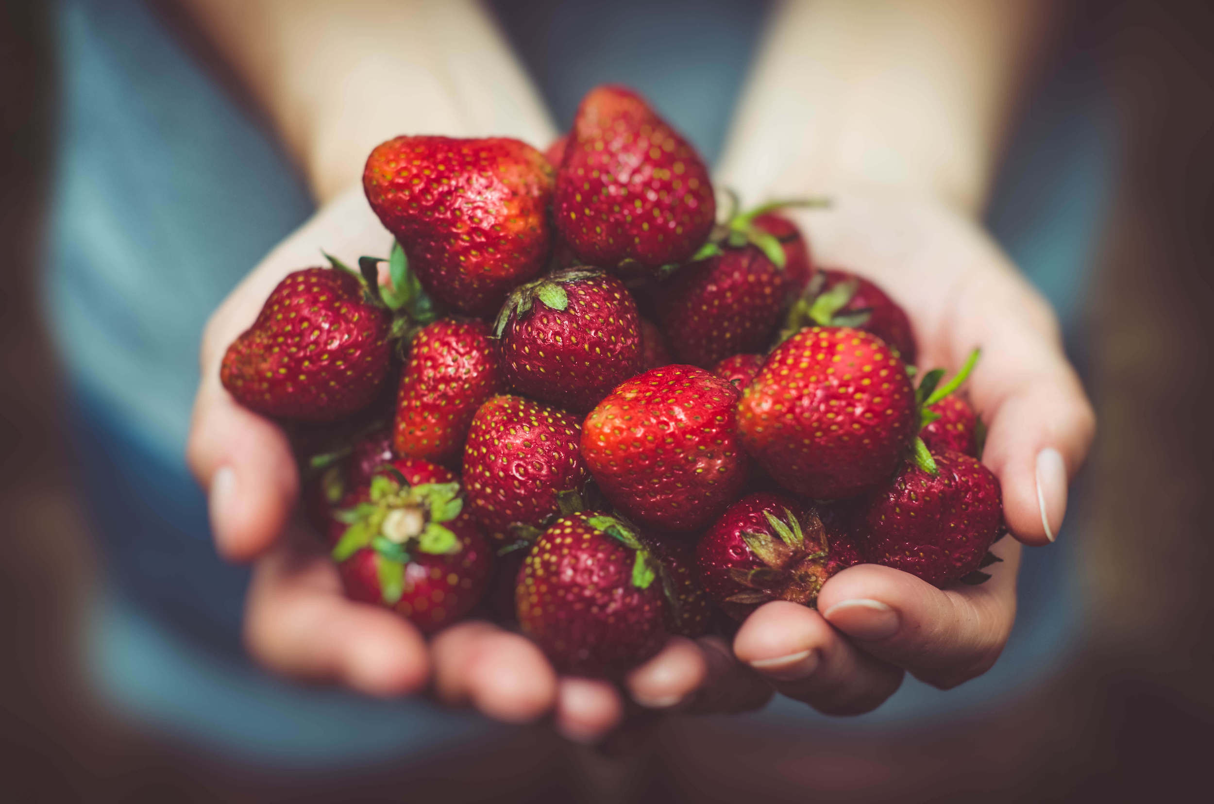 Strawberries For Juicing - The Physical Evolution
