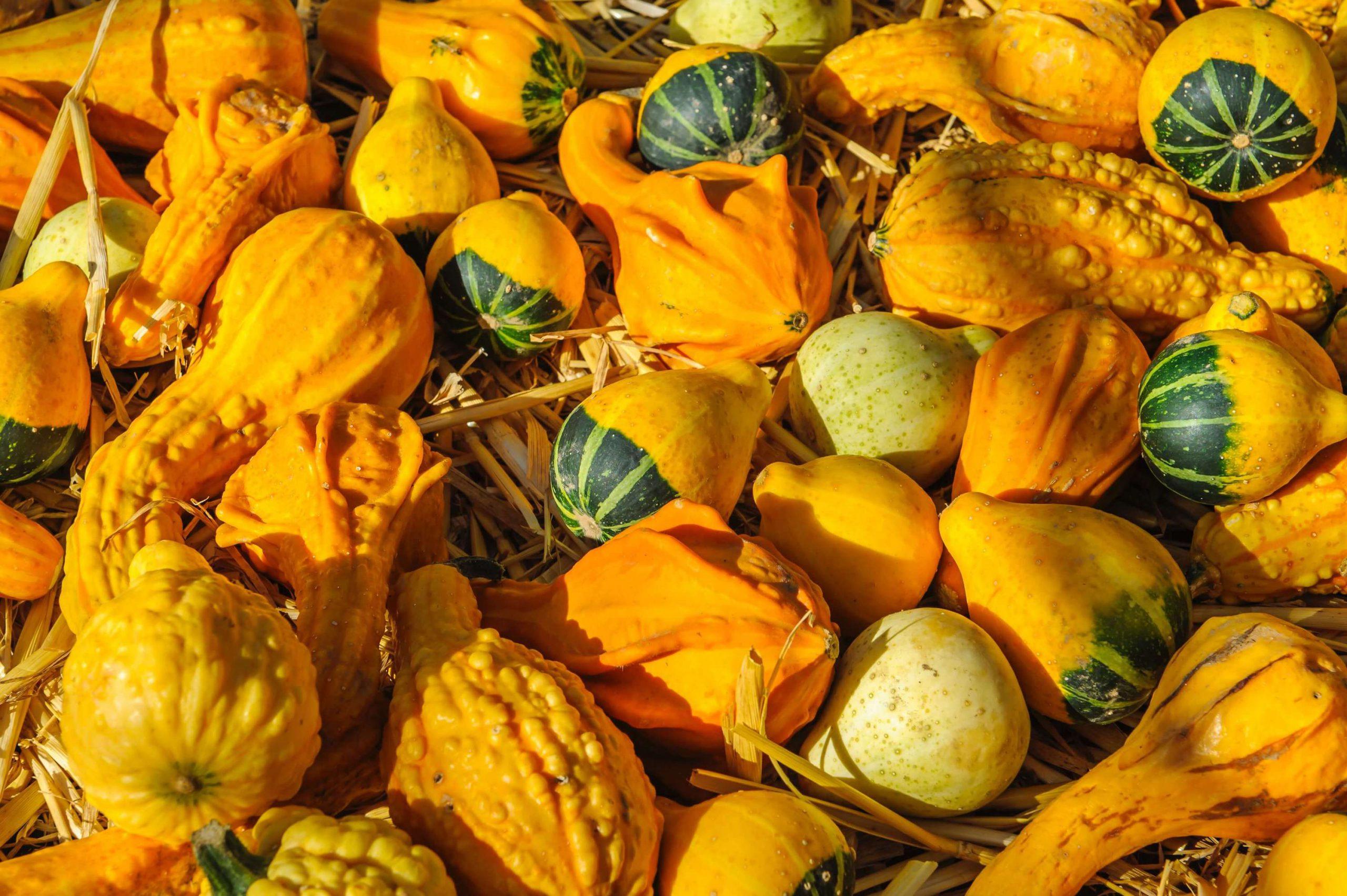 Yellow-And-Orange-Foods