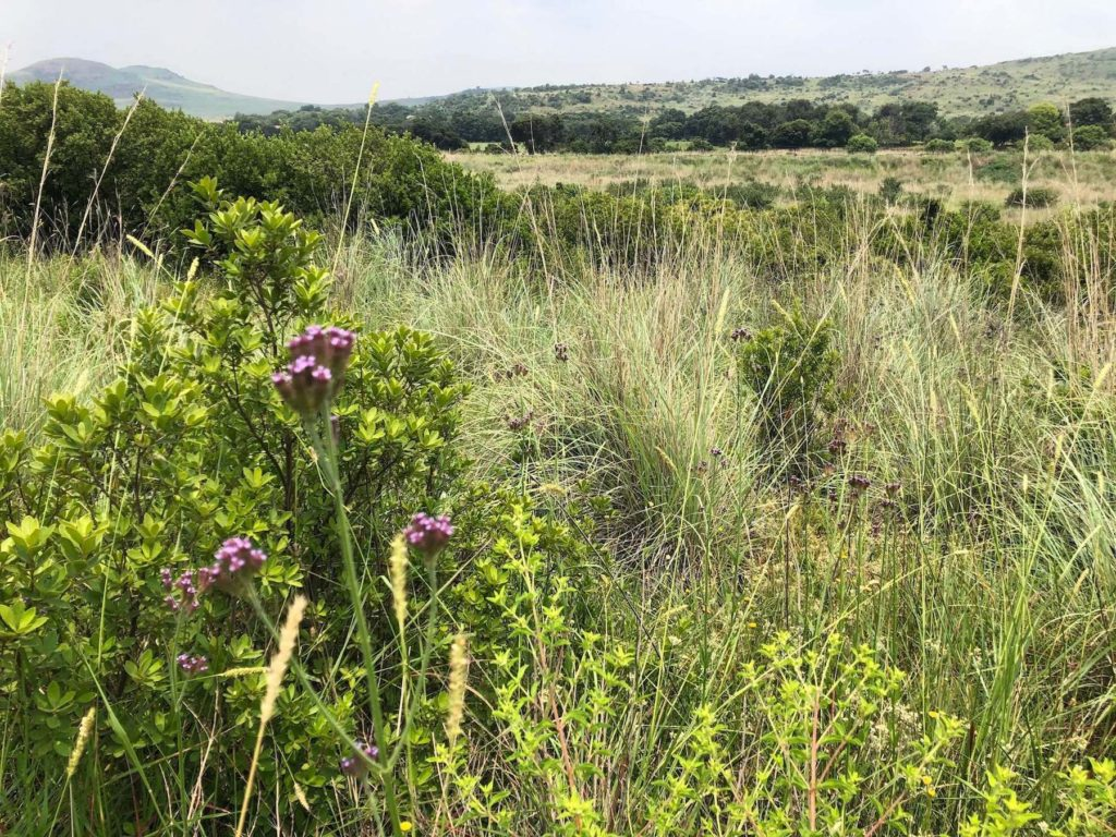 Beautiful fauna and flora Suikerbosrand
